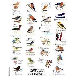 Affiche 40x50 Abécédaire des oiseaux de France