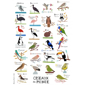 Print ABC of worldwide birds