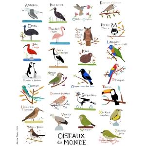 Affiche 40x50 Abécédaire des oiseaux du monde