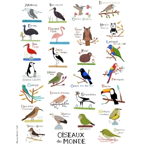 copy of Print 40x50 ABC of birds